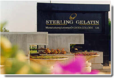 Sterling Gelatin is a division of Sandesara Group of companies involved in manufacturing of gelatin for pharmaceutical and edible uses. We have collaboration with CRODA Colloids, a world leader in gelatin technology, to set up brand new Gelatin manufacturing facility at Baroda, India. The gelatin can be used for food, photographic, cosmetics, metal, refining, paper, plastics, toiletries, collage, meat, leather, jelly, gel, grade, hard, soft, capsules, shell, vitamin, encapsulation, tablet.
